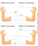 Parts Of A Human Hand Worksheet