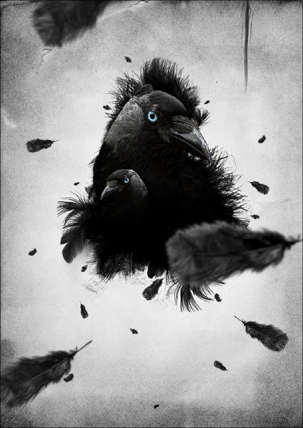 Falling Feathers Wallpaper Create A Feathered Crow Illustration