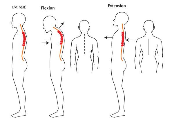diagrama de espina dorsal