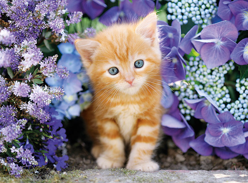 Cute Wallpaper For Home Screen Ginger Cat In Flowers Jigsaw Puzzle Puzzlewarehouse Com