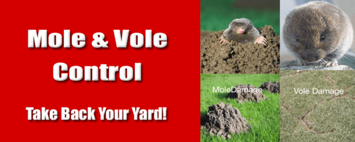 Get Rid Of Moles In Yard | Albany-Clifton Park-Saratoga