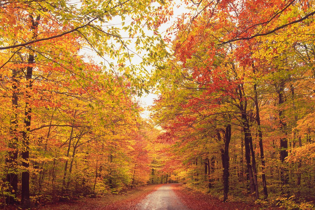 Hd Wallpaper Fall Leaf Change New England Fall Foliage Best Areas To Watch The Leaves