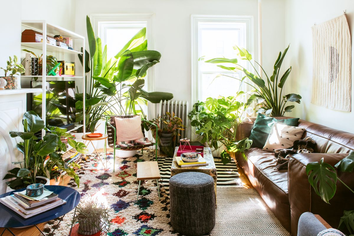 Plants For Living Room Best Instagram Accounts For Plant Lovers Curbed