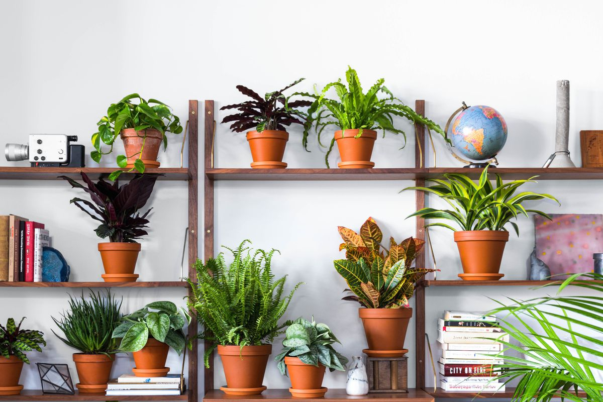 Where To Buy Indoor Plants Online Indoor Plant Nursery Shop Indoor Plants Online India
