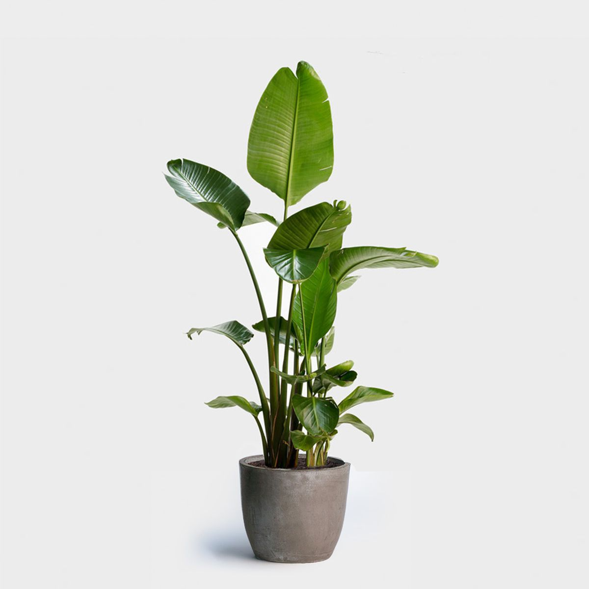 Small Household Plants Buy Indoor Plants Online At These Stores Curbed