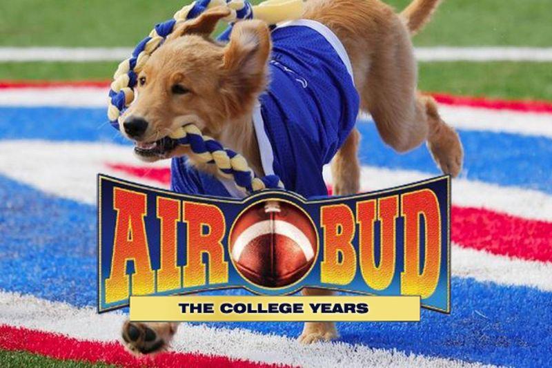 Large Of Air Bud Dog