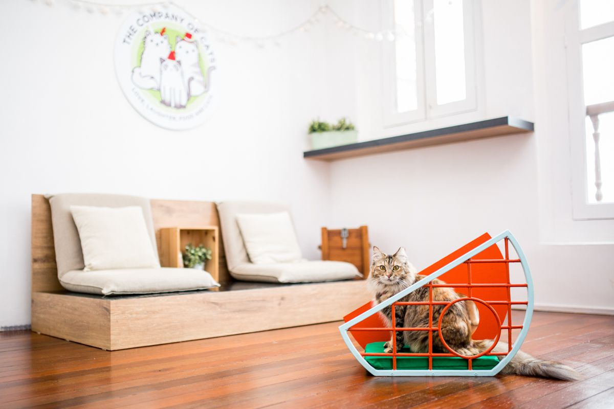 Designer Cat Furniture Australia A Furniture Design Show For Cats Is A Thing Meow Curbed