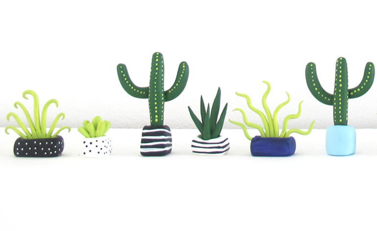Cute Background Wallpapers For Whatsapp Designer Boe Holder S Mini Plants Cacti And Succulents