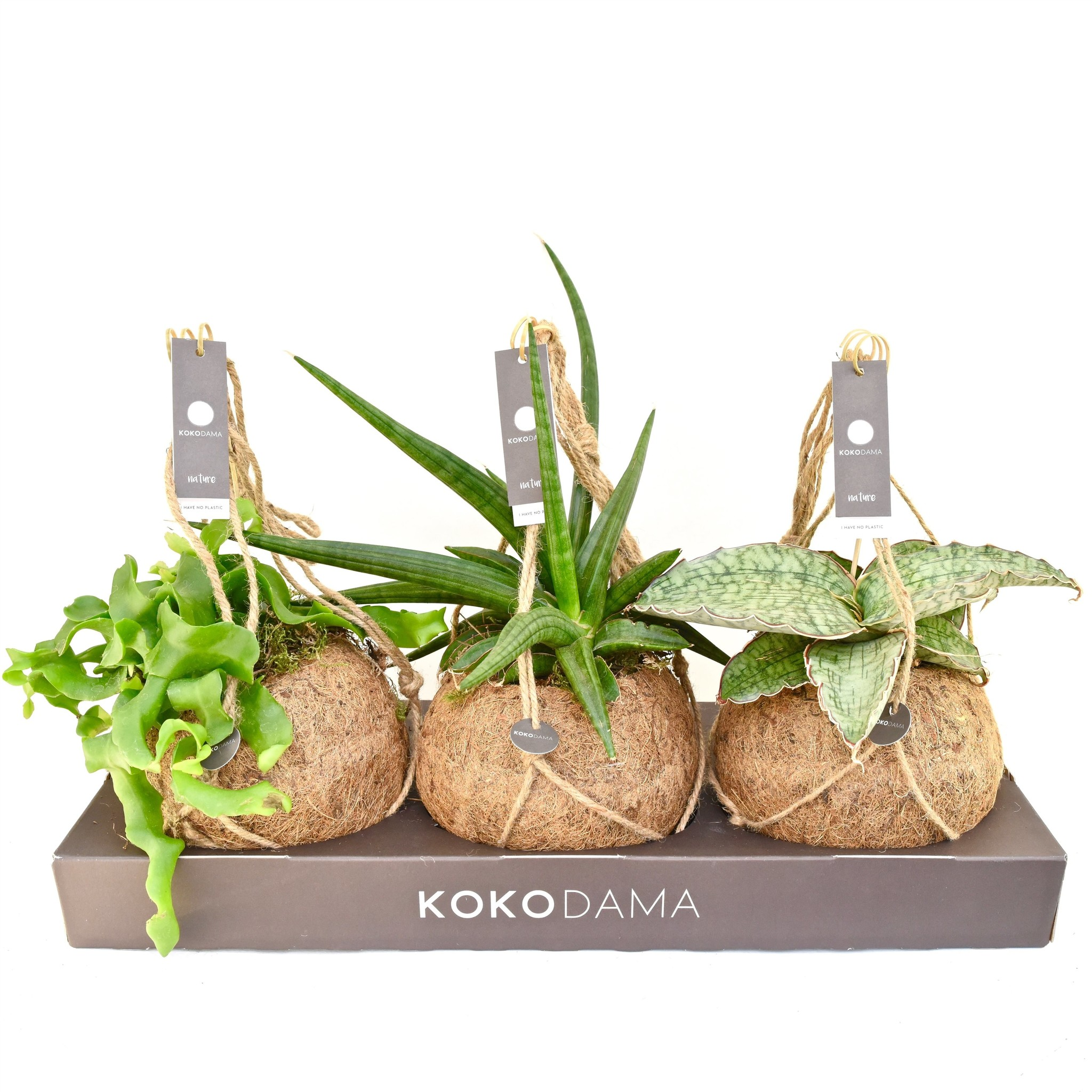 Schaduwplanten Badkamer Kokodama Tough Mix No Plastic 100 Natural