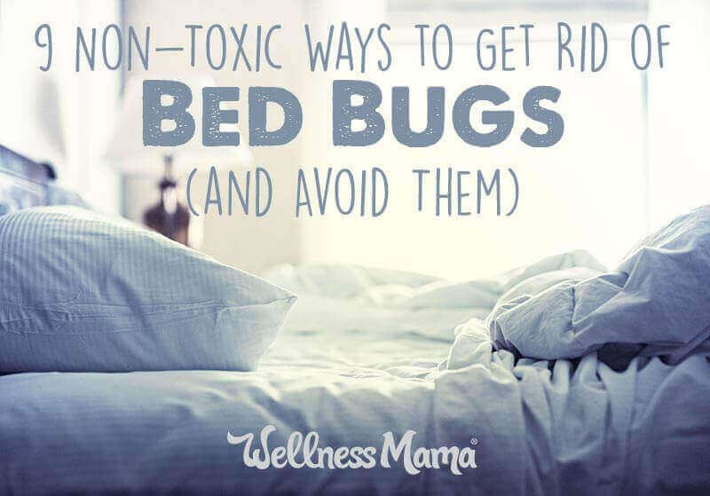 How To Get Rid Of Bed Bugs 9 Non Toxic Options