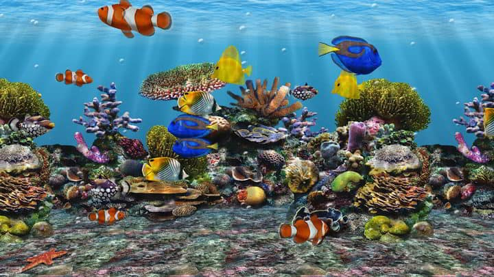 Interactive 3d Aquarium Live Wallpaper The Best Virtual Aquariums For Your Pc You Need To Check Out