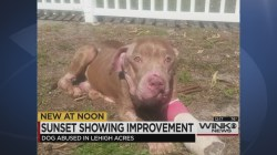 Superb Le Acres Bait Dog Continues To Improve What Does A Bait Dog Do What Is A Bait Dog Pitbull Used For