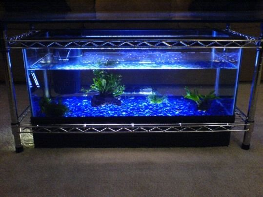 Home Couchtisch Spectacular Diy Fish Tank Coffee Table - Free Guide And