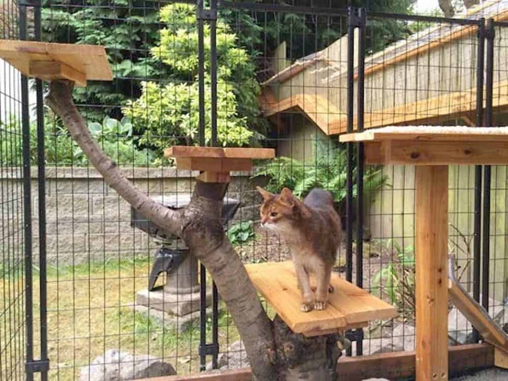 Cat Cage Indoor Diy Cat Runs So Your Furry Friends Can Enjoy The Summer Sun