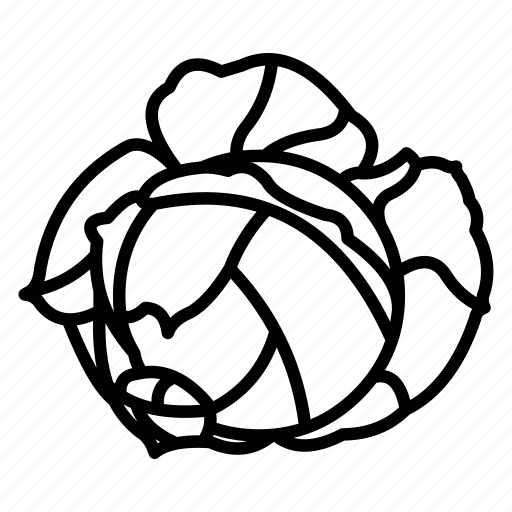 Cabbage Cabbage Ball Cabbage Leaf Cabbage Outline