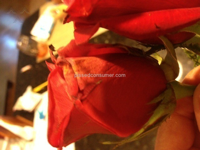 Avasflowers Dead Red Roses Delivered In Box By Not Local
