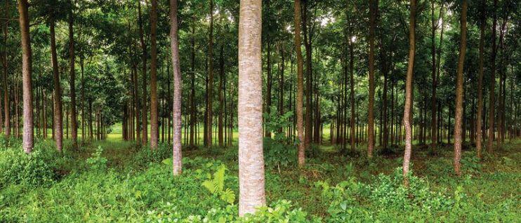 afforestation