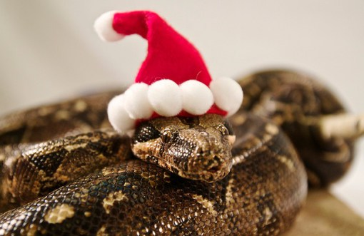 Cute Birthday Wallpaper Don T Be Scared Here Are 15 Snakes Wearing Tiny Hats