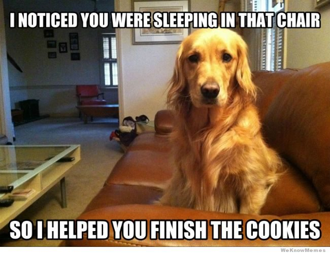 10 Memes That Get Life With Dogs Oh So Right