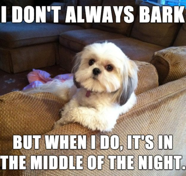 My Life My Rules My Attitude Wallpapers For Girls 10 Memes That Get Life With Dogs Oh So Right
