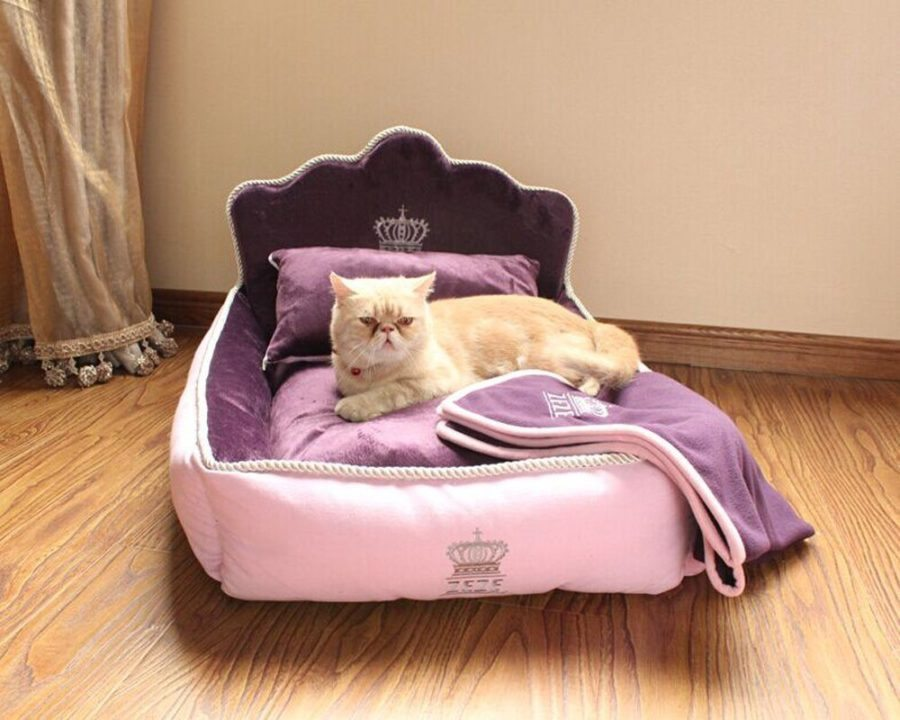 Sleeping Purrty Best Cat Beds You Can Buy Online