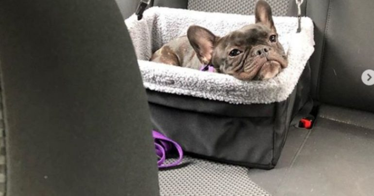 Dog Carrier At Walmart Traveling With Pets Dog Car Seats And Dog Seat Belts