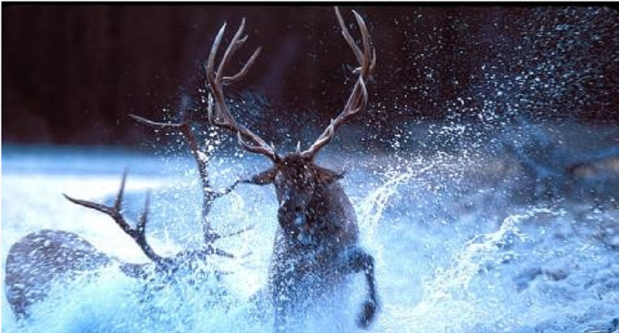 Fall Deer Wallpaper 10 Awesome Photos Of Bull Elk Fights Pics