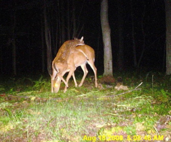 Flying Spaces 30 Best Trail Camera Photos Of All Time