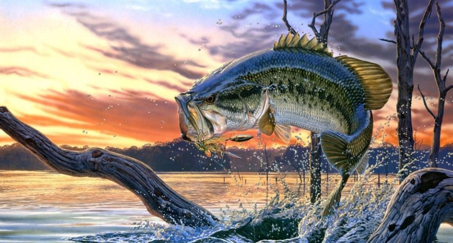 Fall Weather Wallpaper 5 Fall Bass Fishing Lures You Should Always Keep On Deck
