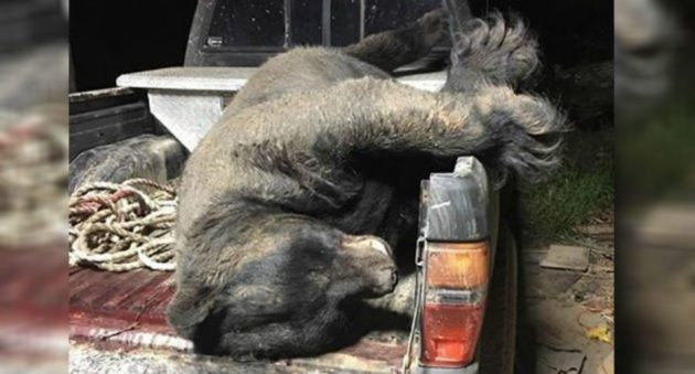 Hunting With Shot 673-pound Black Bear May Be New Georgia State Record