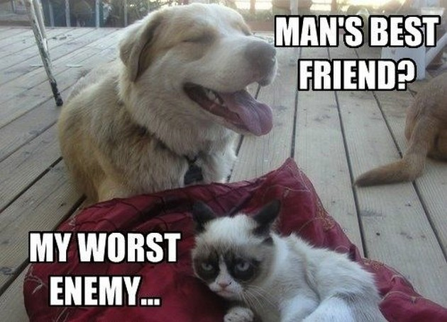 Cute Wallpapers Of Kittens And Puppies 25 Funny Cat Memes About Life In The Modern World Cattime