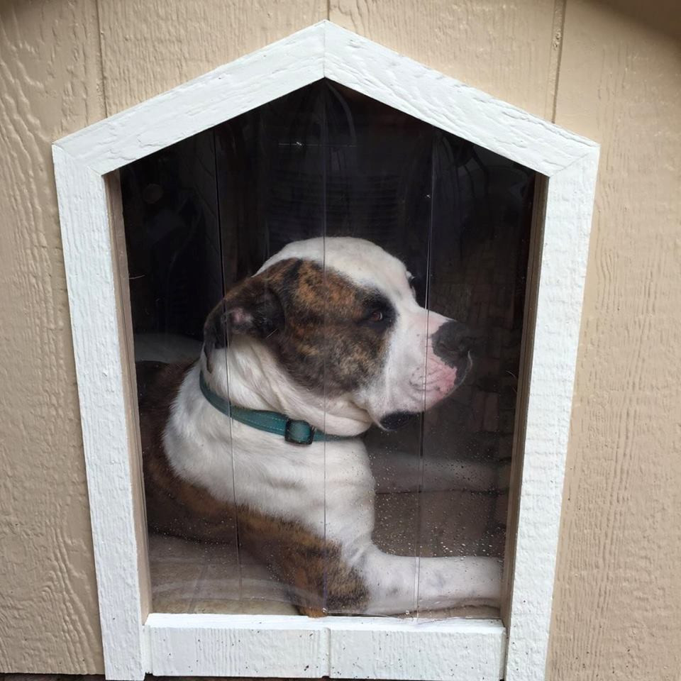 Dog House Large Basic Dog House With A C