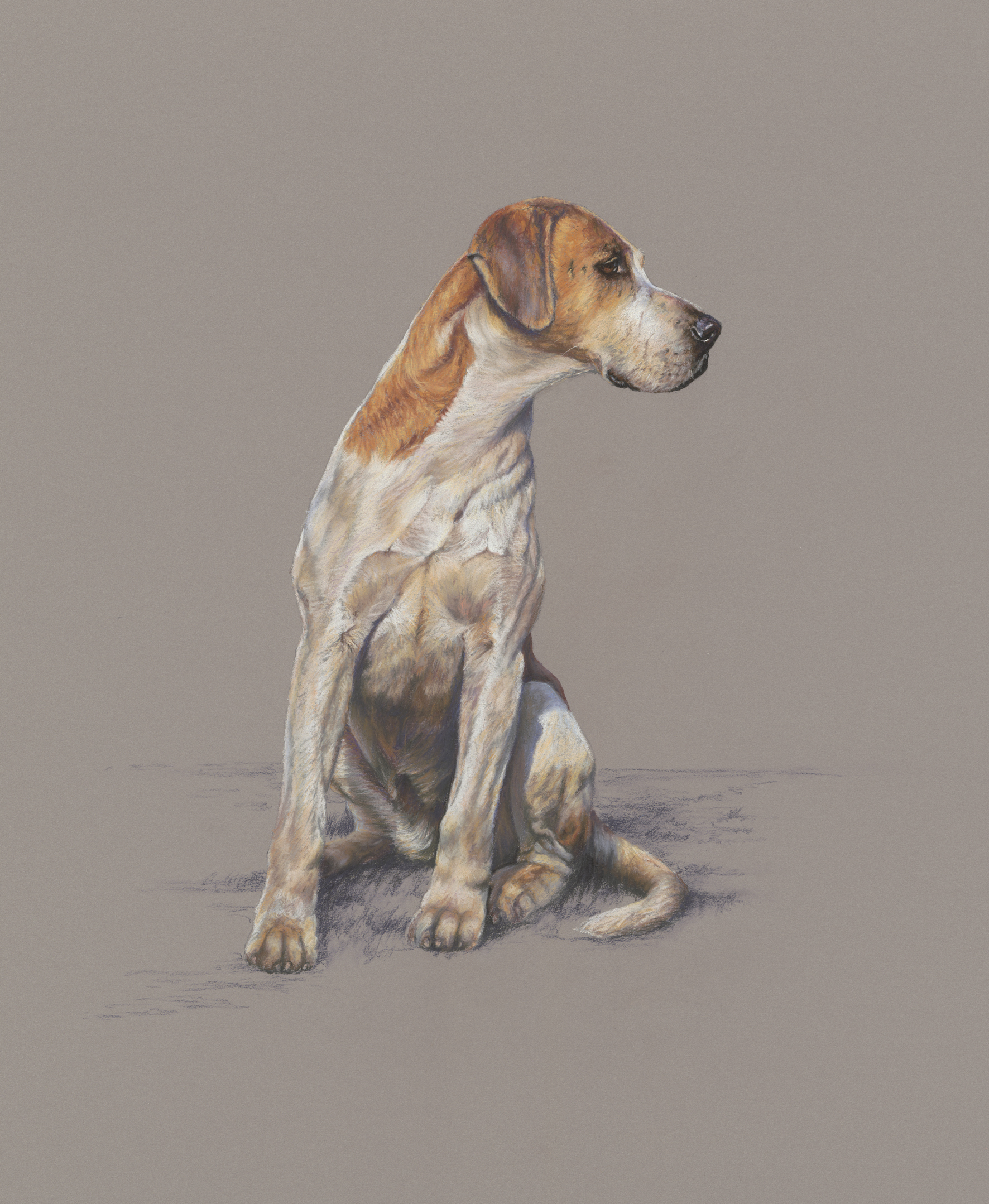 Arte Bella Gallery Mark Hankinson Canine Artist At Stockbridge Gallery Dogs In Art