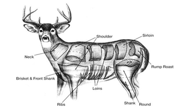 field dressing a deer diagram field dressing a deer