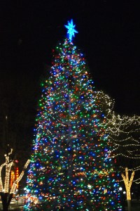 What You Missed at the Boston Common Tree Lighting ...