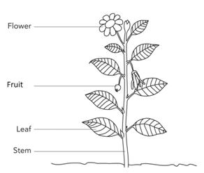 different parts of plants do diagram
