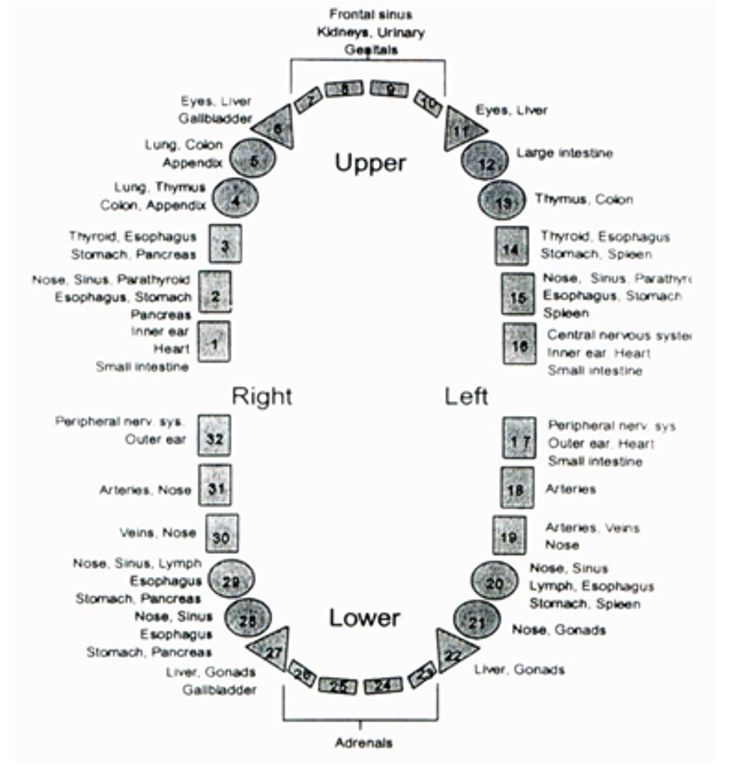 This Meridian Tooth Chart Will Show How Each Organ is Linked to you