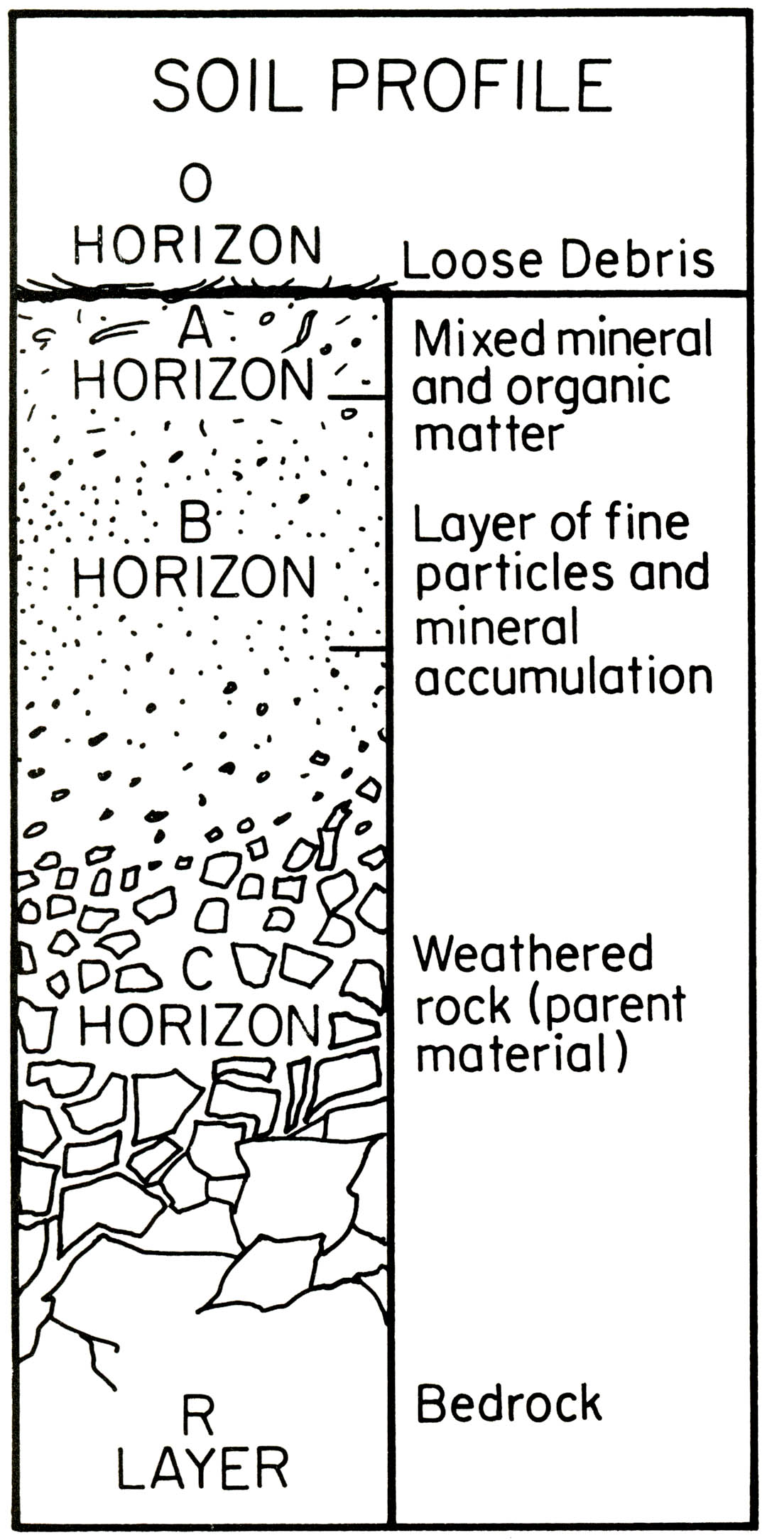 Soil Horizons Worksheet