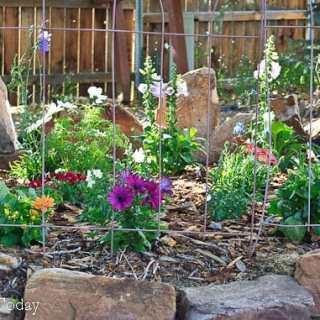 Upper flower garden (1 of 1)