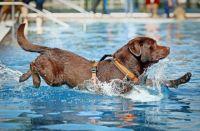 Hundeschwimmen in Freibdern: Tierischer Spa oder ...