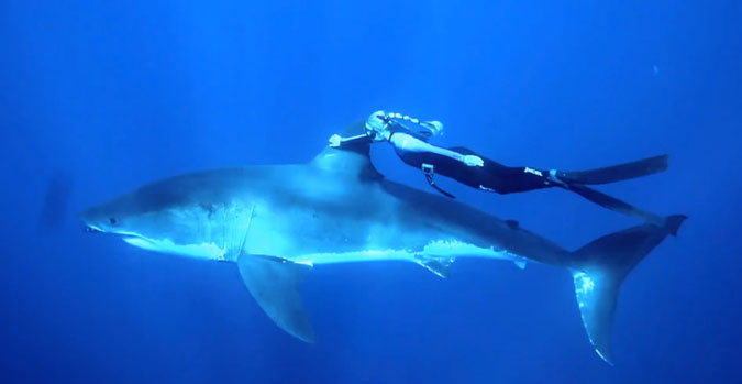 Passion Wallpapers Girl A Small Girl And A Giant Shark The Inertia