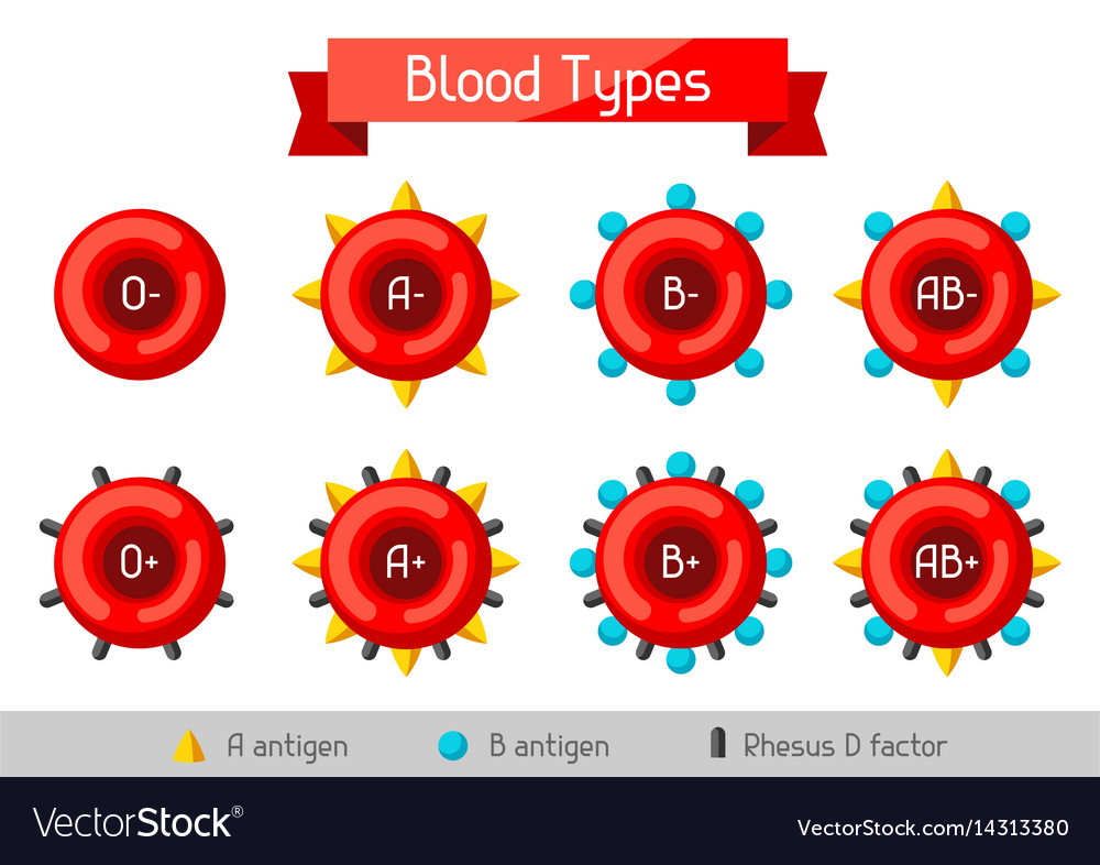 Set of blood cells types medical and healthcare Vector Image