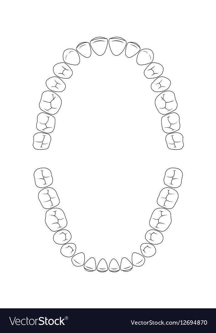 Tooth Layout Diagram - Wiring Diagram Schematics