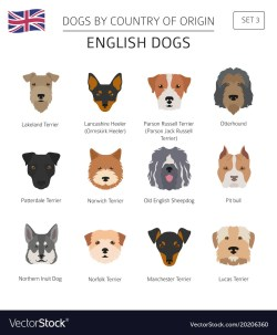 Small Of English Dog Breeds