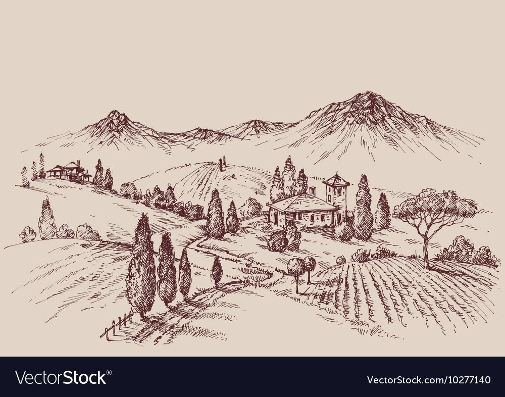 Vineyard sketch Wine label design Rural landscape Vector Image