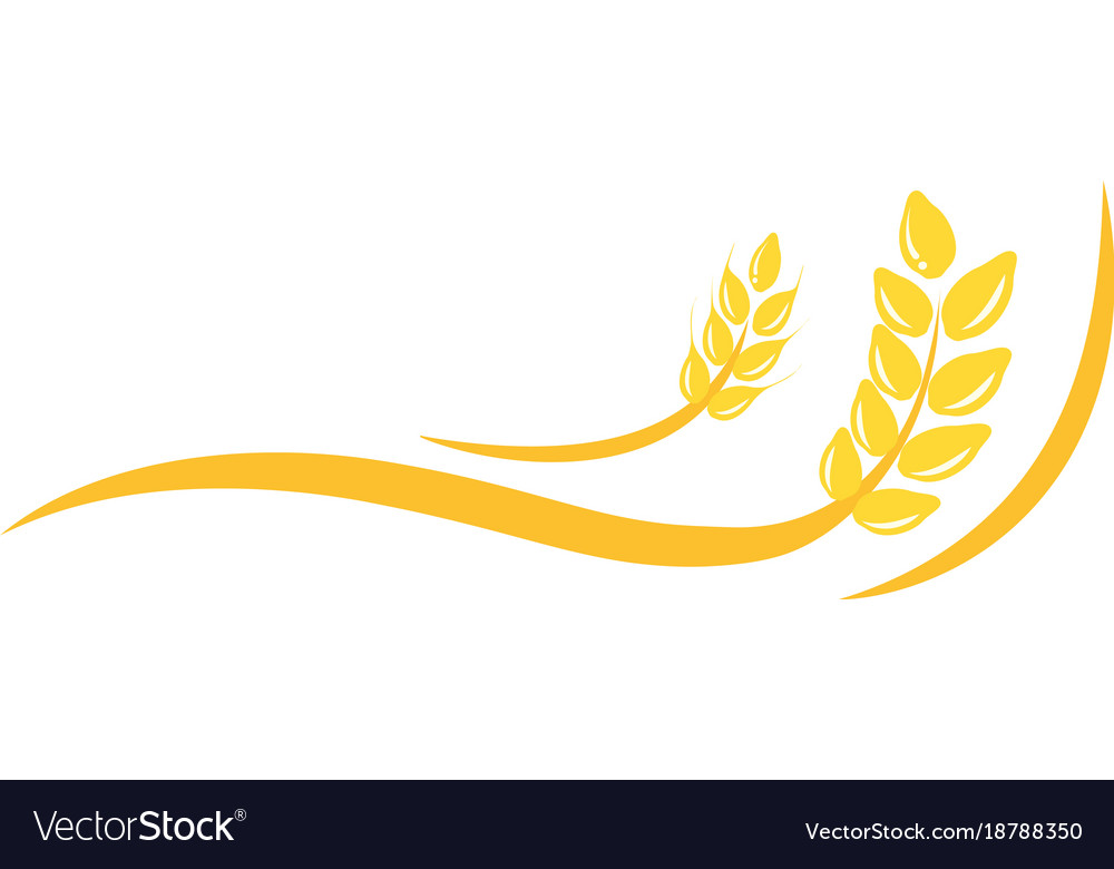 Agriculture wheat logo template icon deign Vector Image - wheat template