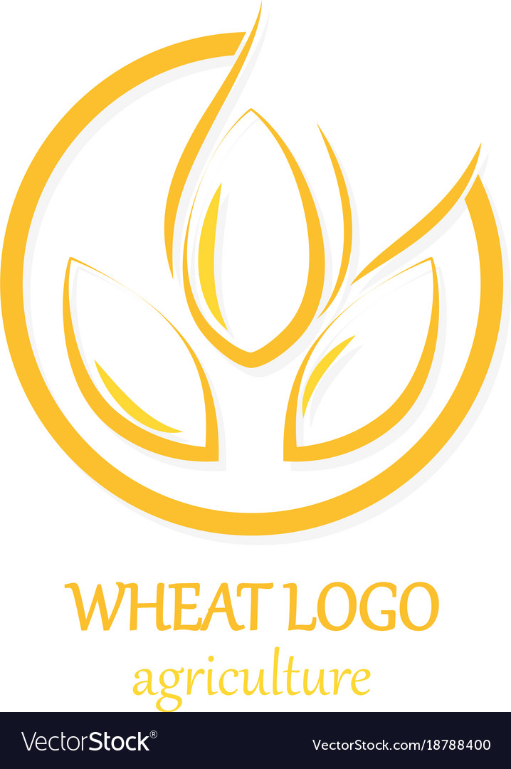 Agriculture wheat logo icon design template Vector Image - wheat template