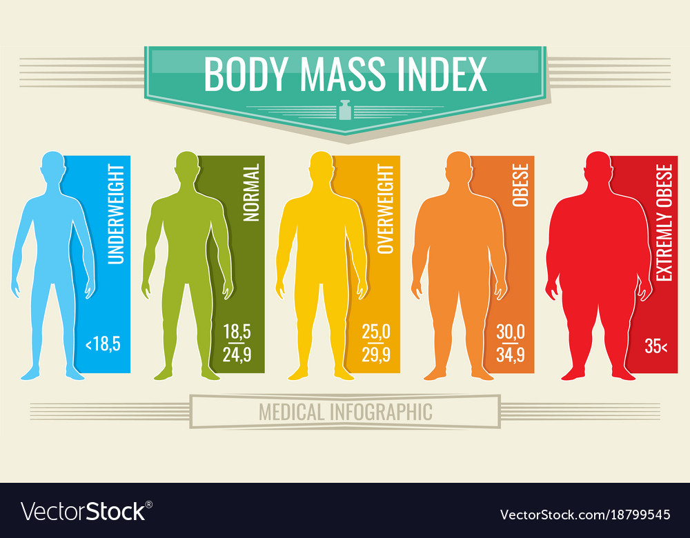 Man body mass index fitness bmi chart with Vector Image