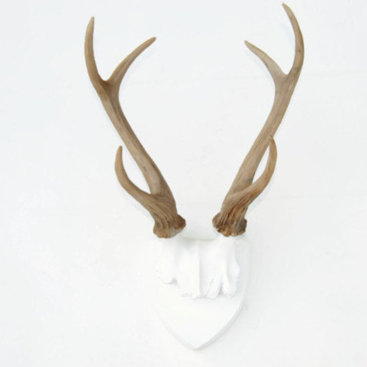 Fake Deer Skull And Antlers Home Decor Brand Near And Deer The Best Prices For Home