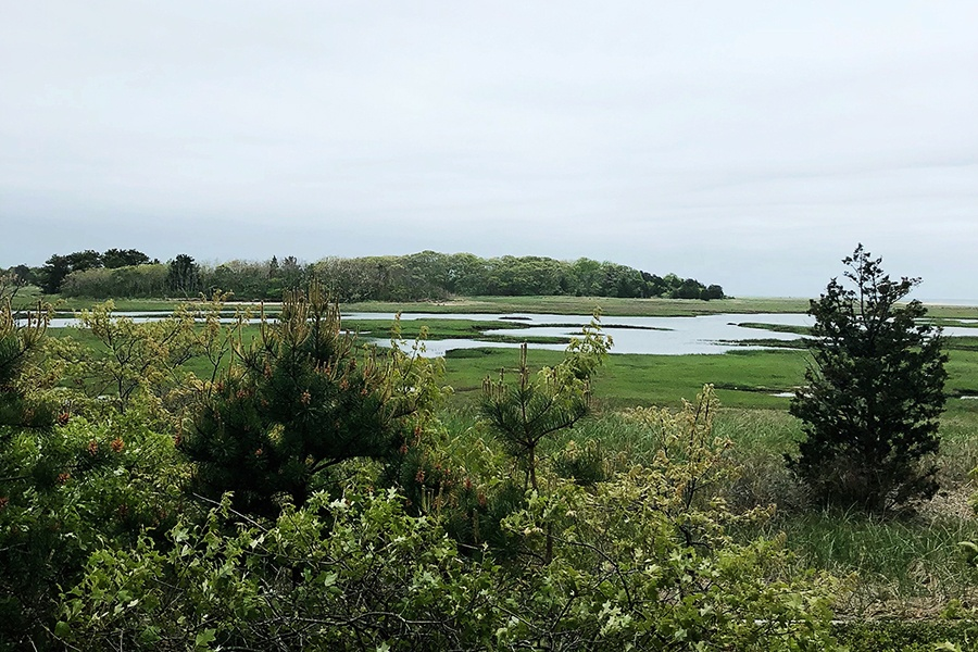 Five Awesome Hikes on Cape Cod